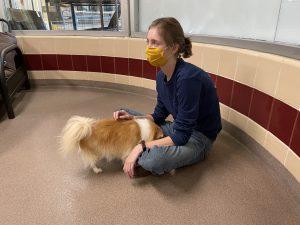 person petting a dog