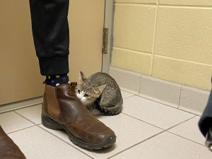 a kitten inspecting someone's foot