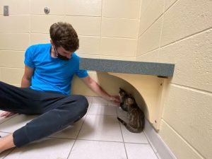 person coaxing a kitten out from under a bench