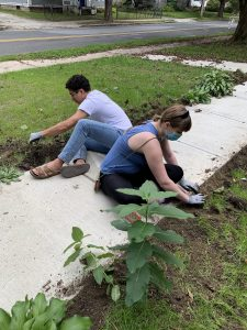 people planting flower bulbs in the soil